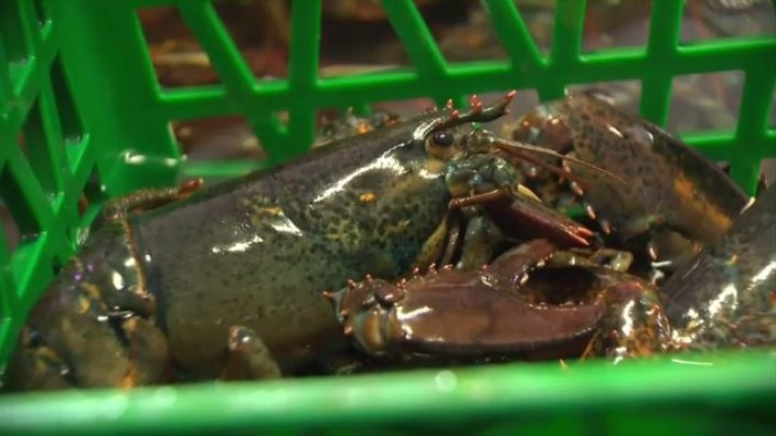 coronavirus affects N.S. lobster exports