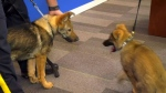 The RCMP is asking kids to name these puppies