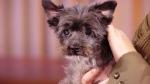 BC SPCA's Treat Week is next week