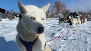 Dogsled/Image from iOS (27).jpg