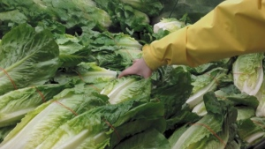 A shopper chooses a head of lettuce.