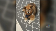 Rusty the therapy dog has died