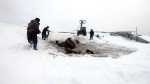 Herd of 11 horses rescued from icy pond