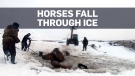 Russian farmers rush to save horses that fell thro