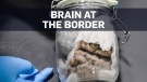 Human brain seized on its way through the Canada-U