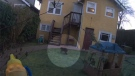 Video shows a tailless creature wandering through the backyard of a home in Vancouver's Kitsilano neighbourhood on Feb. 20, 2020.