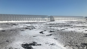 A cannabis operation with multiple greenhouses has moved onto the marsh in Bradford West Gwillimbury. (Aileen Doyle/CTV News)