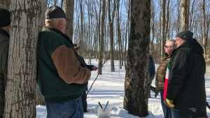 A tree tapping ceremony was held in Oro-Medonte on Saturday Feb. 22 to officially start the 2020 maple syrup season. (Lexy Benedict / CTV News)