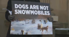 Sled dog Activists