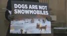 Sled dog Activists