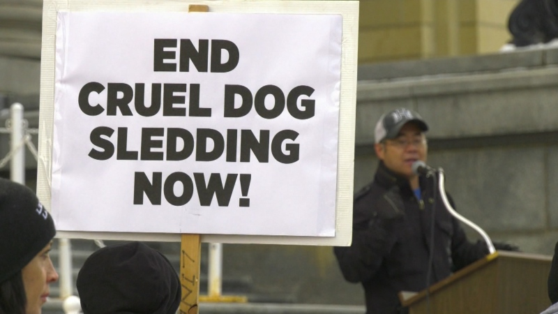 Sled dog protest