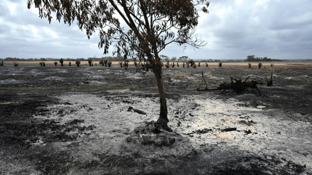 Wildfires burned a fifth of Australia's forests: study