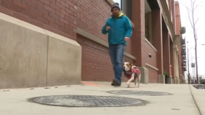 A man in the U.S. says his dog was shocked by an electrified manhole cover during a walk in Chicago, the latest of multiple similar incidents in the area. (CNN/WBBM)