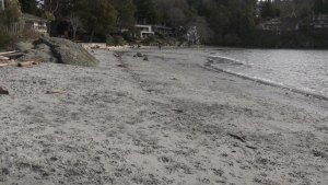 Saanich councillor Karen Harper asked council to direct municipal staff to reconsider off-leash beach use for dogs to protect wildlife in Cadboro Bay: (CTV News)
