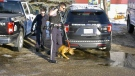 An Edmonton police officer fired at a dog on Monday afternoon in the Alberta Avenue area. The dog was not injured. (Sean Amato/CTV News Edmonton)