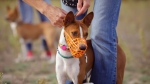 A dog wearing a muzzle at a dog park. (Shutterstock)