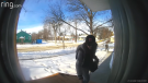 Jayson Crang caught on video the moment Edmonton police caught a woman who had taken a package off his doorstep. (Courtesy: Jayson Crang)