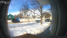 Jayson Crang caught on video the moment Edmonton police surrounded a woman who had taken a package off his doorstep on Feb. 21, 2020. (Courtesy: Jayson Crang)