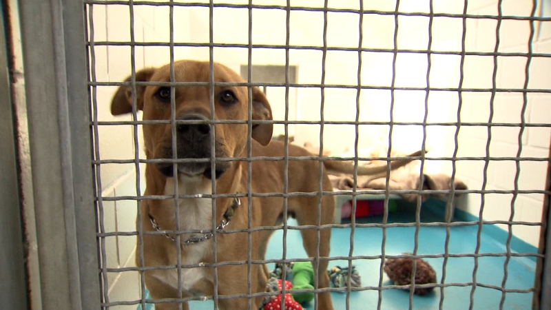 Councillors want changes to aggressive dog bylaw