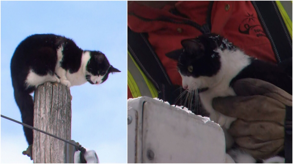 A small cat was rescued by Toronto hydro crews after it became stuck on the top of a pole..