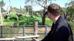 Canadian singer Michael Buble recently visited a zoo in Australia to sing for a group of gorillas that exhibited calm behaviour after staff played the apes his Christmas album. (Werribee Open Range Zoo)