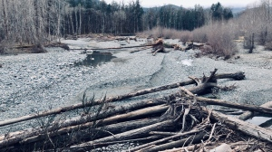 The Cowichan Lake & River Society says that the Cowichan River changed its shape after heavy rainfall in the region, drying out a previous fish habitat: (CTV News)