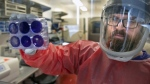 Matt Dunn, a researcher for the Center for Vaccine Research at the University of Pittsburgh, holds dead samples of the coronavirus (COVID-19), Thursday, Feb. 27, 2020, at the Biomedical Science Tower 3 in Oakland, Pa. (Nate Guidry/Pittsburgh Post-Gazette via AP)
