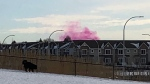 Edmonton Fire Rescue Services said the pink smoke in east Edmonton was coming out of the Edmonton Waste Management Centre.