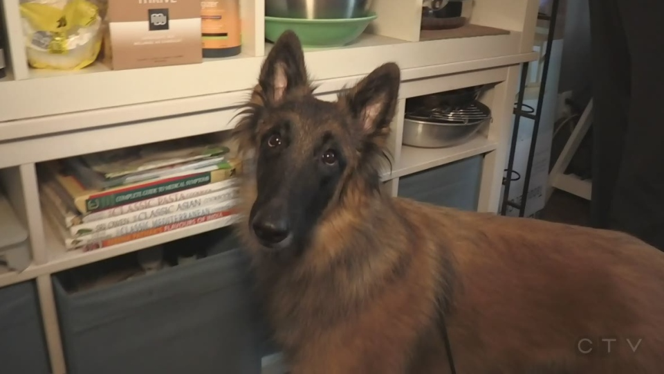 Meet the Cambridge dog awarded Best in Breed