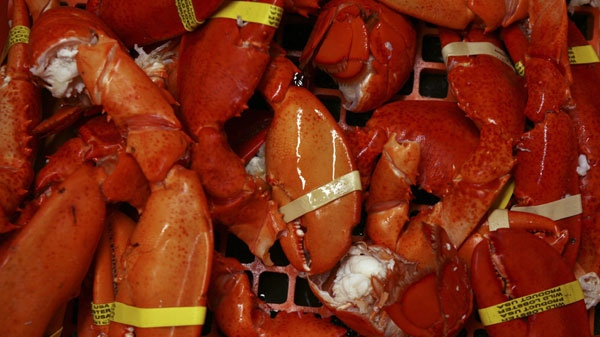 Cooked lobster claws and tails are seen at a lobster dealer in this 2008 file photo. (THE CANADIAN PRESS / AP Photo-Pat Wellenbach)