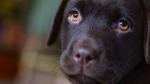 Photo of dog (Skitterphoto/Pexels).