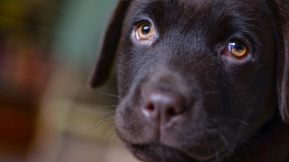 Photo of dog (Skitterphoto from Pexels).