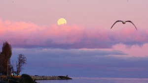 The moon is seen early Monday morning by the Vancouver International Airport in this image from Lay Tan.