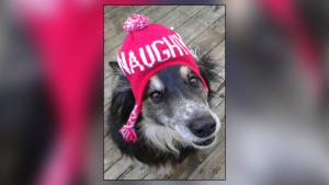Picture This: Pets in Winter Gear