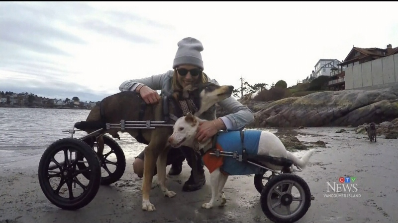 """As soon as he realized what the wheels were for, it was like euphoria for him!"" Adam finds out how a dog -- who was run over by a car -- is healing with the help of a caring person and paraplegic dog in a wheelchair."