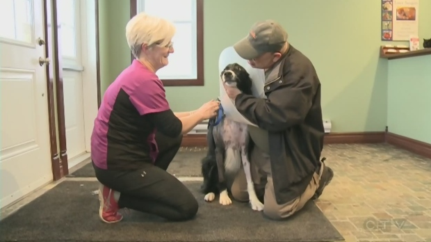 In this week's Ask an Expert, Marina Moore talks to Dr. PJ Rocheleau of Espanola Animal Hospital about pet mobility problems and injuries. Mar. 16/20 (CTV Northern Ontario)