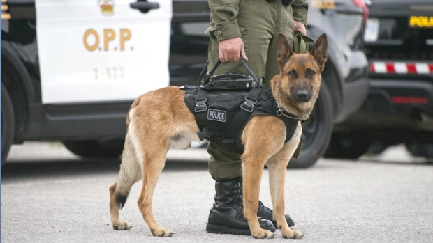 OPP Canine Unit (file)