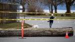 A log is placed on the road to block the entrance to a City of Vancouver parking lot at Jericho Beach in an attempt to stop people from congregating in public spaces amid concerns about the coronavirus, in Vancouver, on Monday, March 23, 2020. THE CANADIAN PRESS/Darryl Dyck