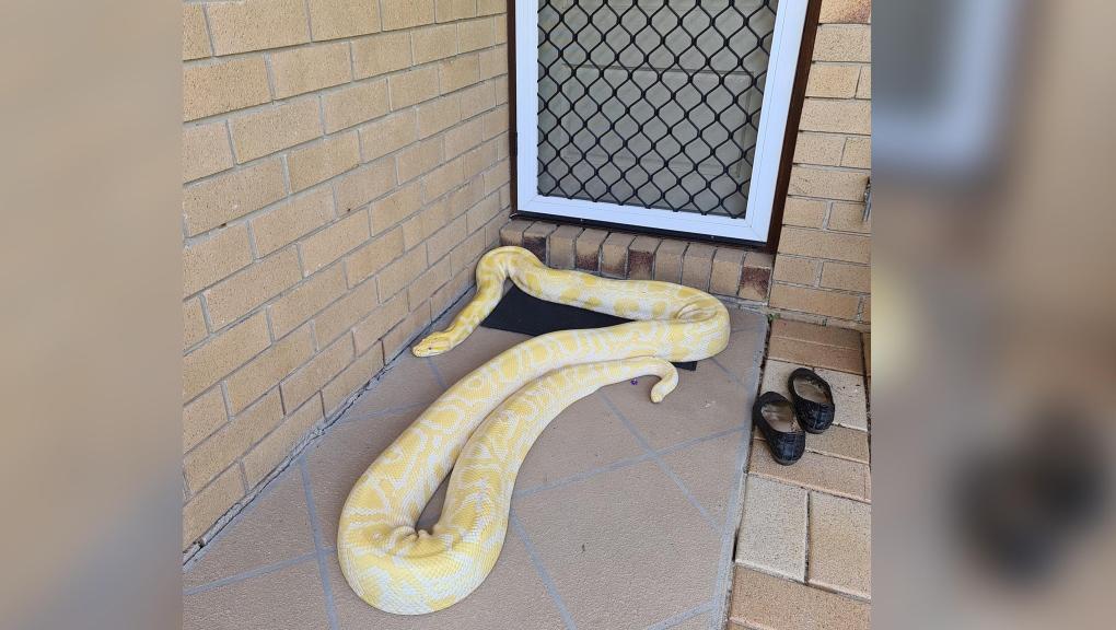 Massive python