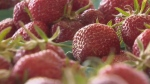 B.C. farmers markets moving online due to COVID-19
