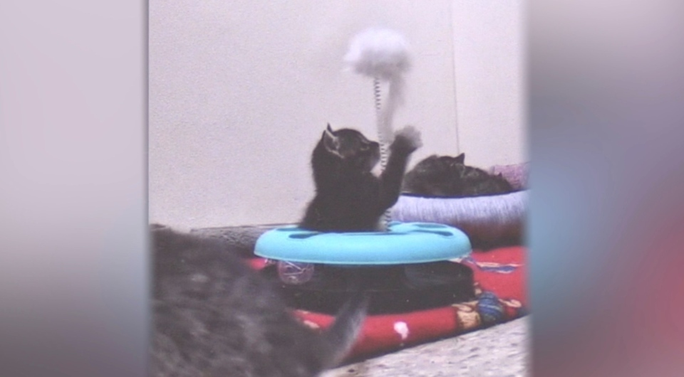 Dartmouth's Bide Awhile Animal Shelter has created a 'kitten live stream' to help brighten people's day during the COVID-19 pandemic.