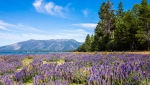 North Lake Tahoe has seen a surge of visitors to the small mountain town, leading the tourism destination to ask people to stay home and travel again when it's safe and viable.(Shutterstock)