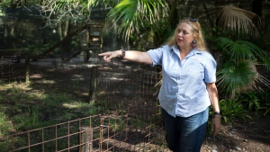 "In this July 20, 2017 file photo, Carole Baskin, founder of Big Cat Rescue, walks the property near Tampa, Fla. Baskin was married to Jack ""Don"" Lewis, whose 1997 disappearance remains unsolved and is the subject of a new Netflix series ""Tiger King."" (Loren Elliott/Tampa Bay Times via AP, File)"