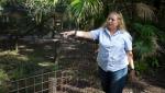In this July 20, 2017 file photo, Carole Baskin, founder of Big Cat Rescue, walks the property near Tampa, Fla. (Loren Elliott/Tampa Bay Times via AP, File)