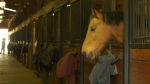 A & T Equestrian Centre in Surrey has 56 horses that need caring for during the COVID-19 crisis.