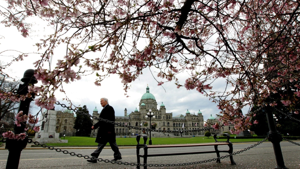 The British Columbia Legislature is framed by cherry blossoms as a pedestrian passes by in Victoria in this file photo. (Darryl Dyck / THE CANADIAN PRESS)