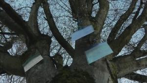 Sawatsky Sign-Off- Joke Tree