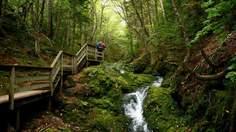 Kết quả hình ảnh cho Fundy National Park, New Brunswick