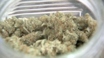 Legal marijuana is seen in this file photo.
