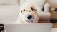 Dogs work at home instagram